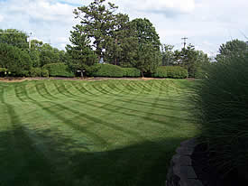 Kettering Lawn Care Service