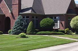 Cincinnati Organic Tree Care