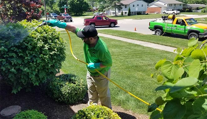 dayton tree spraying service