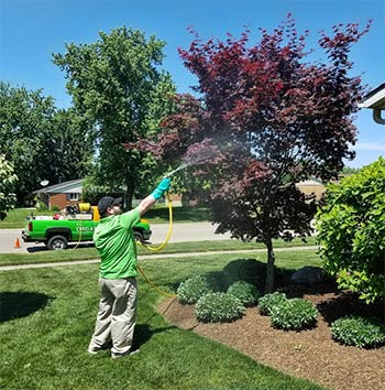 tree and shrub spraying